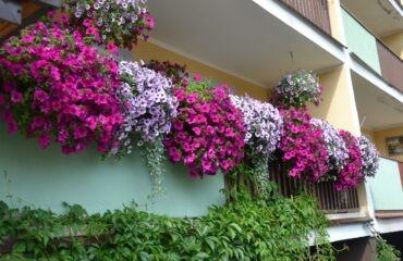 balkony-14-800×533
