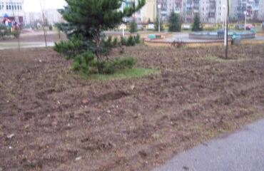 Drzewa -Noniewicza i skwer przySP nr7 008