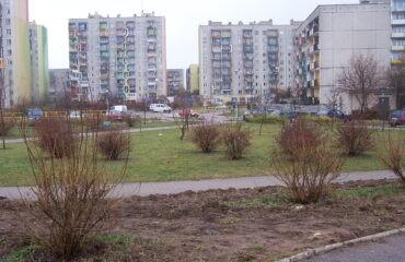 Drzewa -Noniewicza i skwer przySP nr7 009