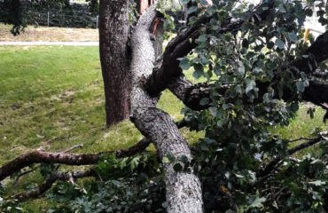 drzewa (1)