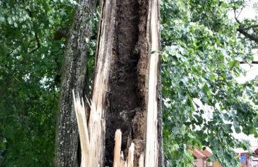 polamane-drzewo (2)