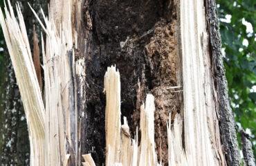 polamane-drzewo (3)