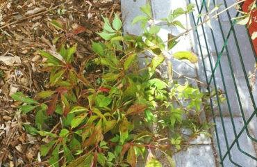 zielony-przystanek (9)