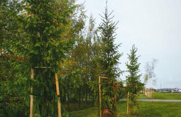 nasadzenia-drzew-jesien-2020 (19)