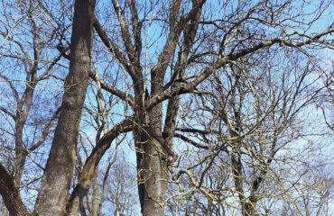 wiazanie-drzew-park-konstytucji-3-maja (1)