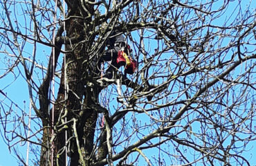 wiazanie-drzew-park-konstytucji-3-maja (2)