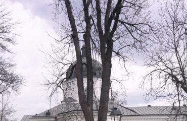wiazanie-drzew-park-konstytucji-3-maja (3)