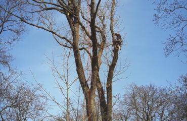 wiazanie-drzew-park-konstytucji-3-maja (4)