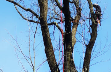 wiazanie-drzew-park-konstytucji-3-maja (5)