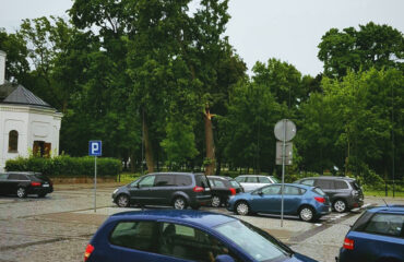 drzewo – park konstytucji