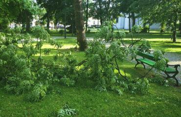 uszkodzone-drzewa-po-burzy-suwalki (10)