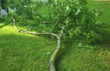 uszkodzone-drzewa-po-burzy-suwalki (11)