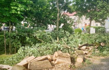 uszkodzone-drzewa-po-burzy-suwalki (14)
