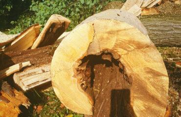 uszkodzone-drzewa-po-burzy-suwalki (16)