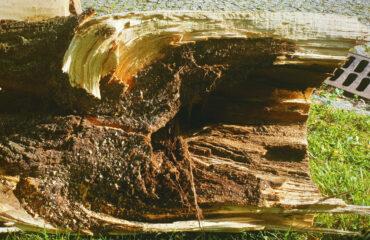 uszkodzone-drzewa-po-burzy-suwalki (17)