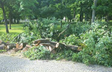 uszkodzone-drzewa-po-burzy-suwalki (20)