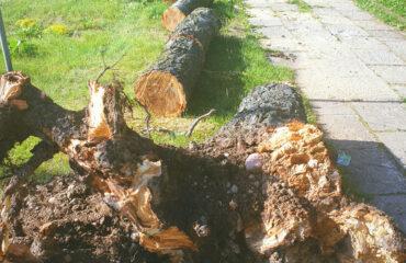 uszkodzone-drzewa-po-burzy-suwalki (4)