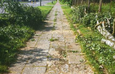 uszkodzone-drzewa-po-burzy-suwalki (8)