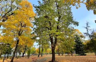 park-konstytycji (1)
